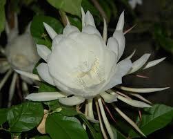 KB Lotus3d