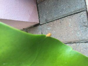 A tiny bud